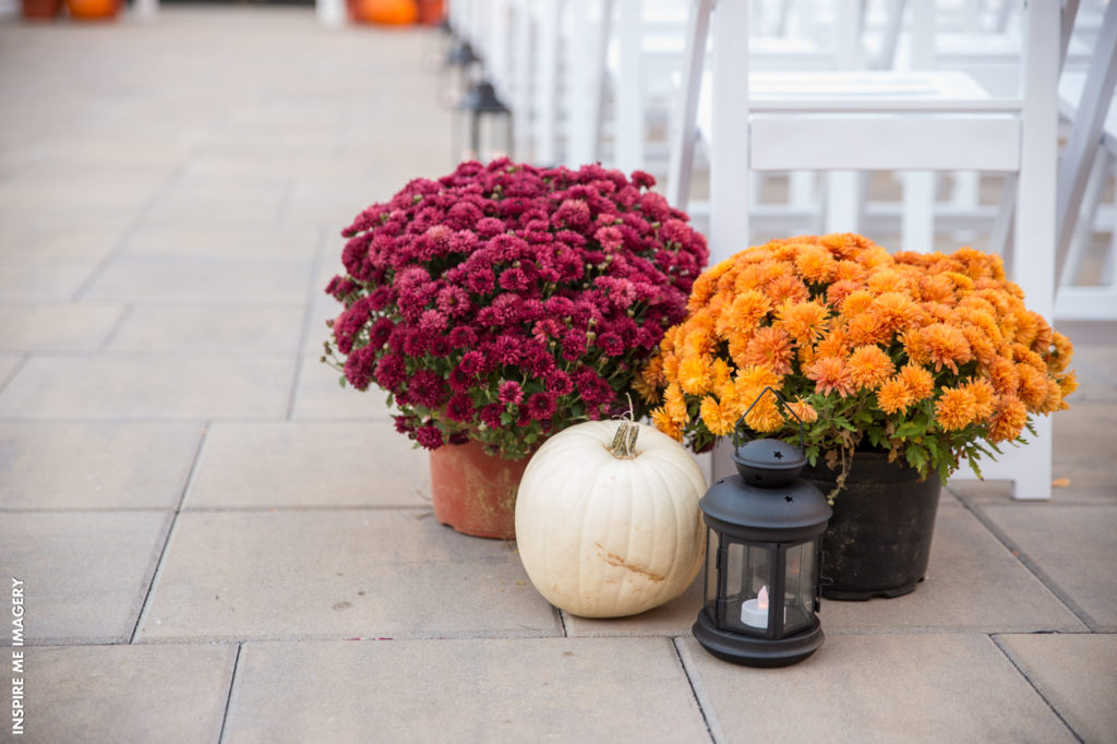 Seasonal potted plants floral arrangement
